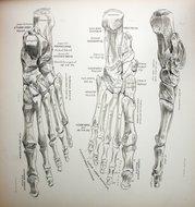 3d_perspective_foot_bones1.jpg